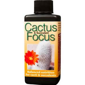 Cactus Focus 100ml-Home & Garden Fertilisers-1.99